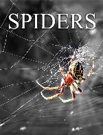 عنکبوت ها