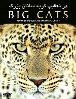 در تعقیب گربه سانان بزرگ