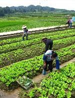 ایمنی در کشاورزی