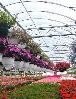 پرورش گل و گیاه در گلخانه