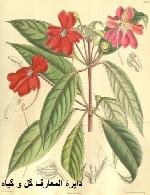 دایرة المعارف گل و گیاه
