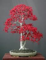 دانستنیهای عمومی در زمینه ی درختان مینیاتوری (بونسای)