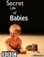 مستند زندگی مخفی نوزاد هاSecret Life of Babies 2014