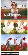 کلیپ آرت گلبرگ پخش شده و دشت گل قرمزCM Wild Poppies Photo Overlays