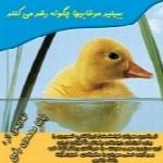 چگونه اردک رشد می کند