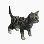 Cat V5