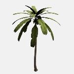 Palm Tree V1
