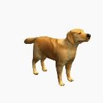 Dog V2