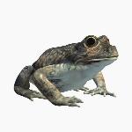 Banjofrog V1