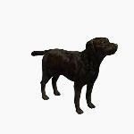 Dog V1