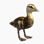 Bird V1