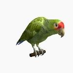 Amazon Parrot V1