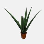 Aloe Plant V1