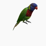 Australian Rainbow Lorikeet V1